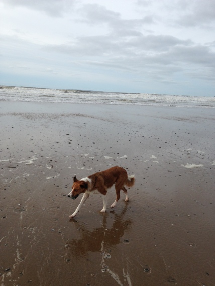 beach walk with Moja