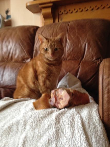 Thumbelina with bone