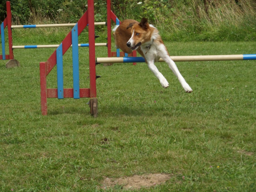 Agility training.JPG