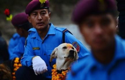 Dogs in Nepal 2