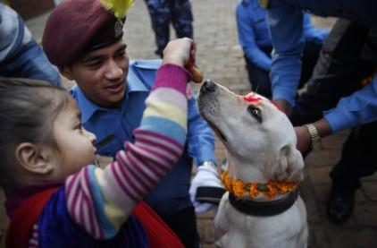 Dogs in Nepal 3