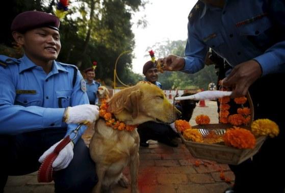 Dogs in Nepal 4