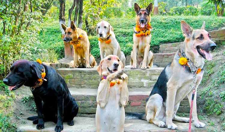dogs in Nepal 5