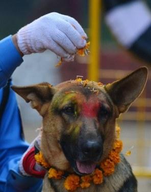 Dogs in Nepal