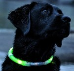 glowdoggie-dog-collar-4081