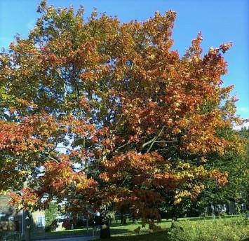jules-tree