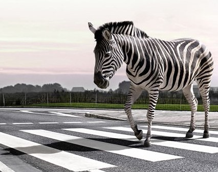 zebra-crossinguSE .jpg